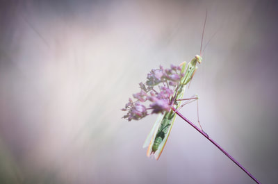 Thierry Perrier photographe nature paysage Insectes